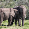 Elephants at the Bottlierskop Game Reserve